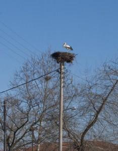 En av mange storker i Livadia