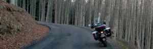 Min BMW R1150GS og tett skog